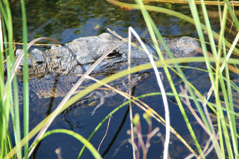 Everglades - Rondreis Florida & South USA | US Travel
