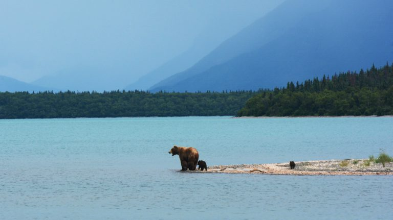 Beren - Rondreis Alaska | US Travel